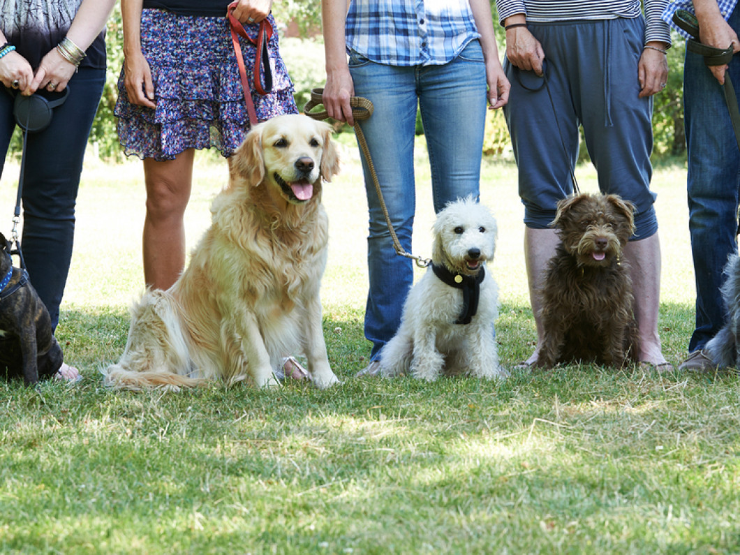 Basic Obedience Classes in Ballston Spa, NY